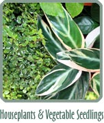 Houseplants & Vegetable Seedlings